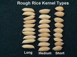 Short Grain vs Medium Grain vs Long Grain Rice