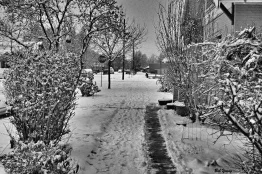 21Dec2013_1a_Last-Farmer4s-Market_3in-Snowfall_B&W-Good