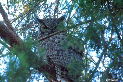 """Wise Ole Owl"""