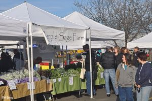 05April2014_1c_Boise-Farmers-Market_Purple-Sage-Booth