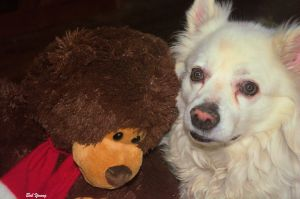 29Dec2014_1a_Captains-Shack_Buddy_With-TeddyBear_Good