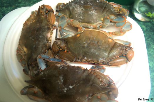 Soft Shell Blue Crabs ready for cleaning.